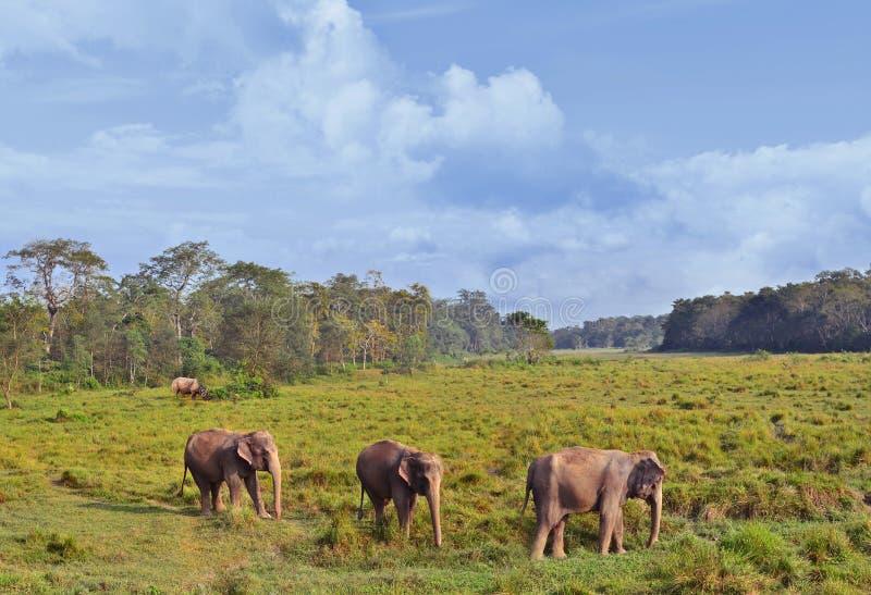 Wilde Landschaft mit asiatischen Elefanten lizenzfreie stockfotografie