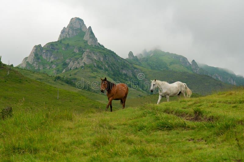 Wilde laufende und springende Pferde lizenzfreie stockfotos
