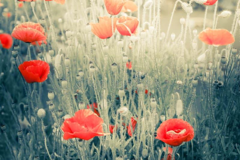 Wilde Mohnblumenblumen auf Sommerwiese Art der russischen Volksmalerei lizenzfreie stockbilder