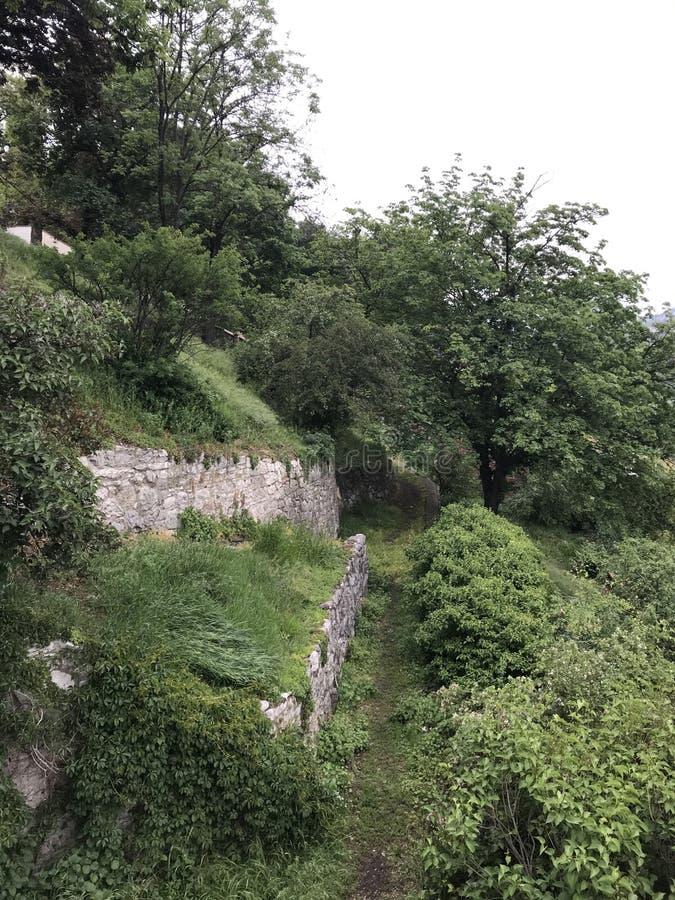 Wilde Natur und alter Stein lizenzfreies stockfoto