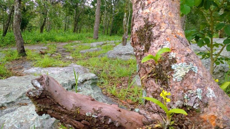 Wilde orchideeën stock afbeeldingen