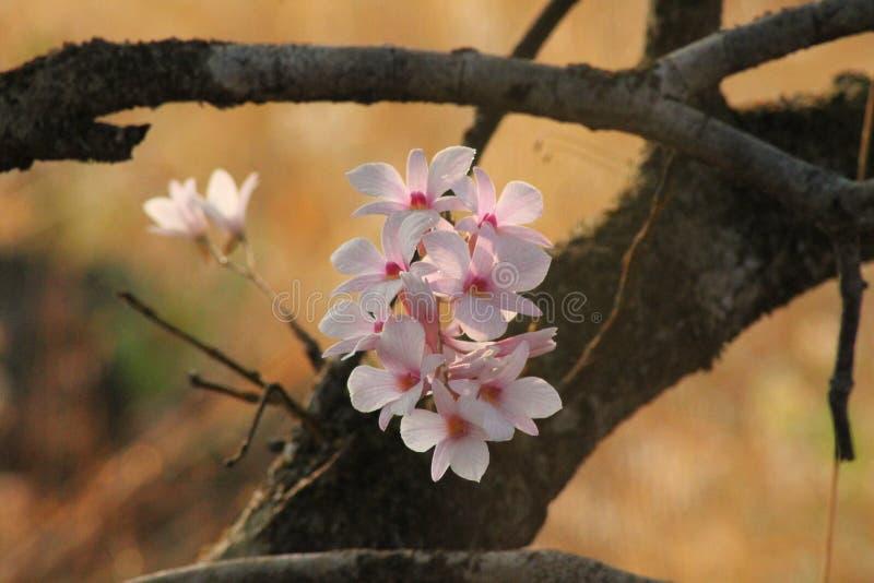 Wilde Orchidee stockbild