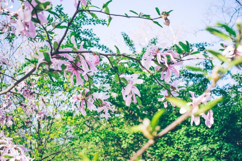 wilde orchidee op de boom roze tederheid stock fotografie