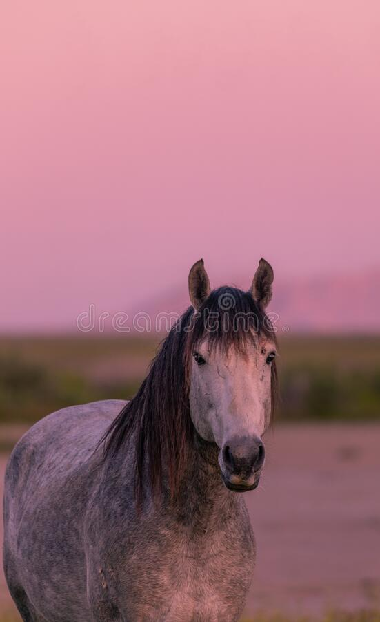 Wilde Paarden in een woestijnzon stock afbeeldingen