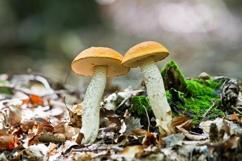 Wilde paddestoel in bos stock afbeeldingen