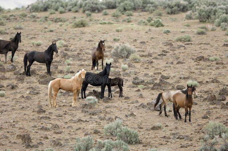 Wilde Pferde auf Abhang lizenzfreie stockfotos