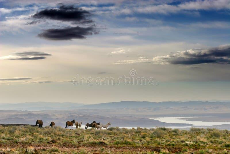 Wilde Pferde auf Ridge lizenzfreies stockbild