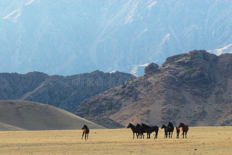 Wilde Pferde in den Wüstenbergen lizenzfreies stockfoto