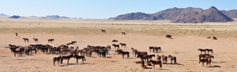 Wilde Pferde des namib Panoramas stockbilder