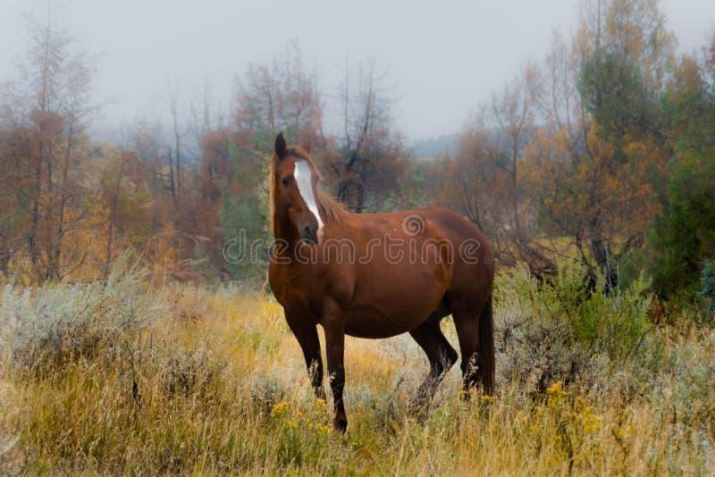 Wilde Pferde von Theodore Roosevelt National Park stockfotografie