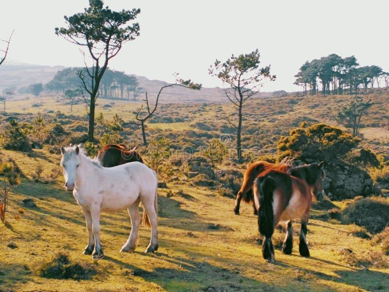 Wilde Pferdefamilie auf dem Berg stockfotografie