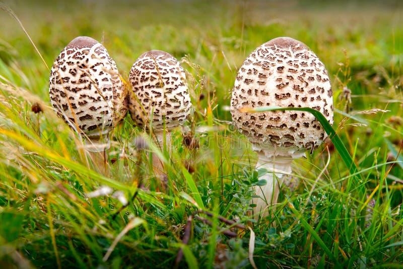 Wilde Pilze lizenzfreie stockfotos