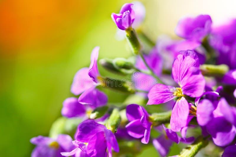 Wilde Purpere Bloemen stock foto