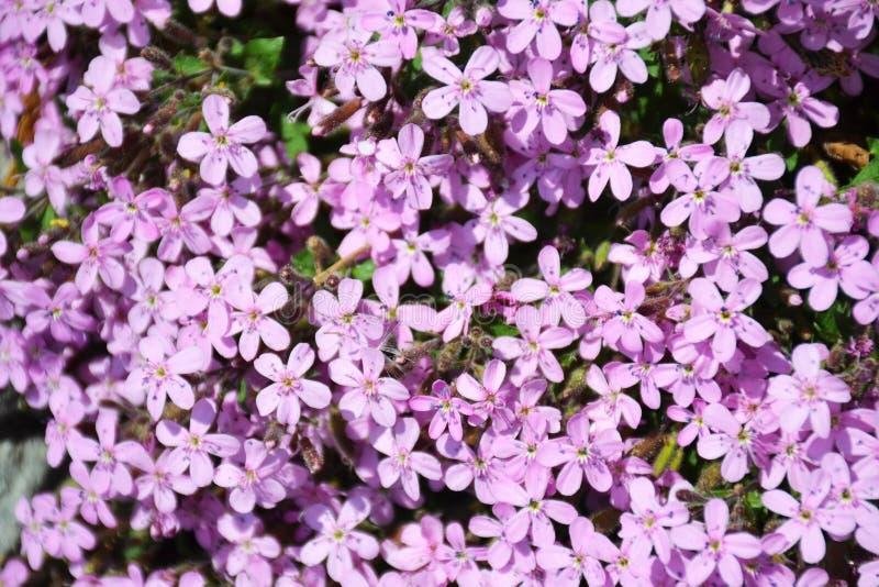 Wilde purpere bloemen op een gebied royalty-vrije stock foto
