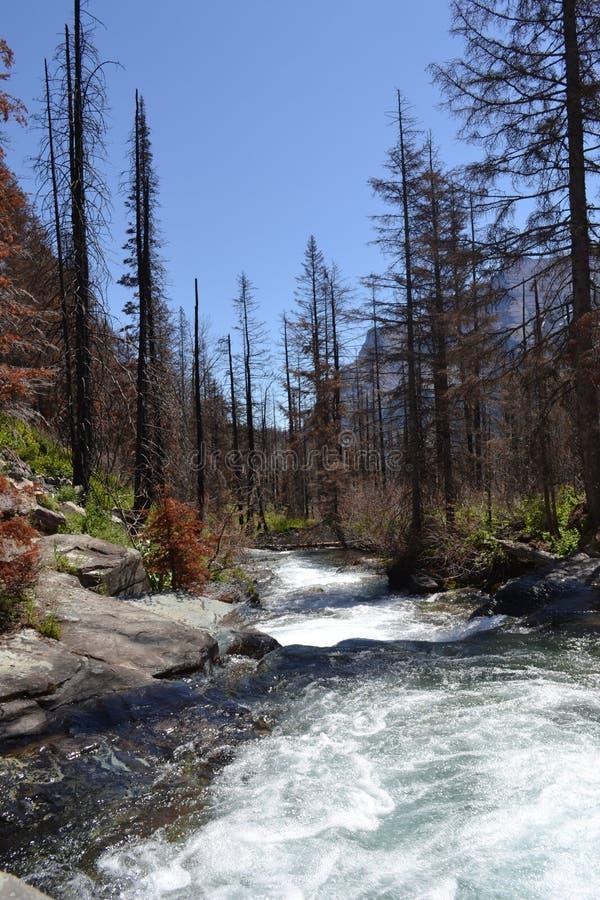 Wilde rivier in Gletsjer Nationaal Park stock fotografie