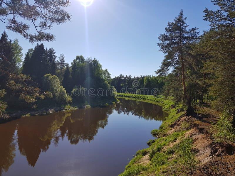 Wilde rivier in het pinery bos op de lente met zon Mooie aard in openlucht sc?ne stock afbeelding