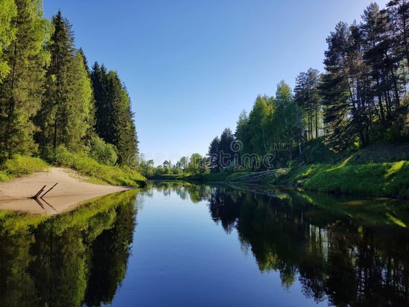 Wilde rivier in het pinery bos op de lente Mooie aard in openlucht sc?ne stock fotografie