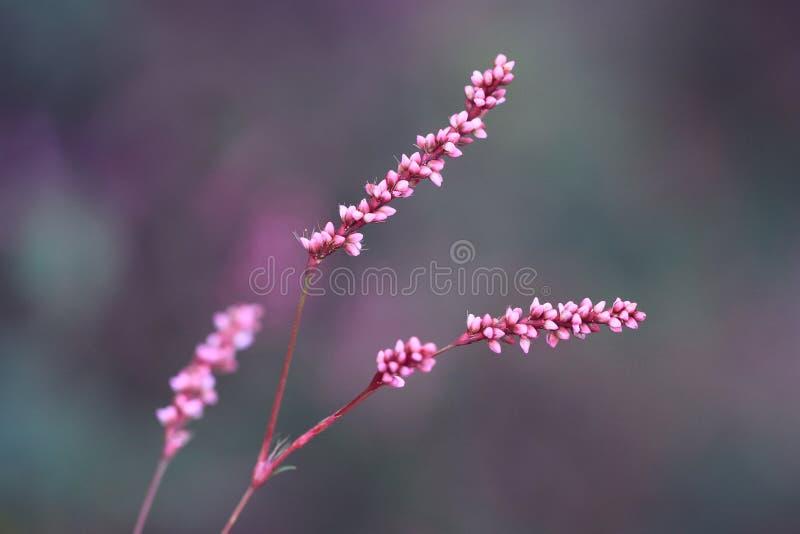 Wilde roze bloemen bij schemer stock afbeeldingen