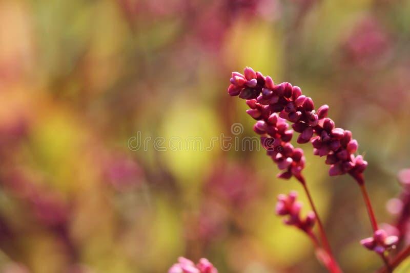 Wilde roze bloemen in de herfst royalty-vrije stock fotografie