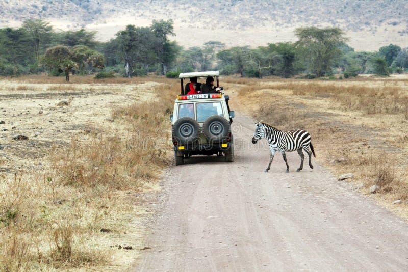 Wilde safari royalty-vrije stock fotografie
