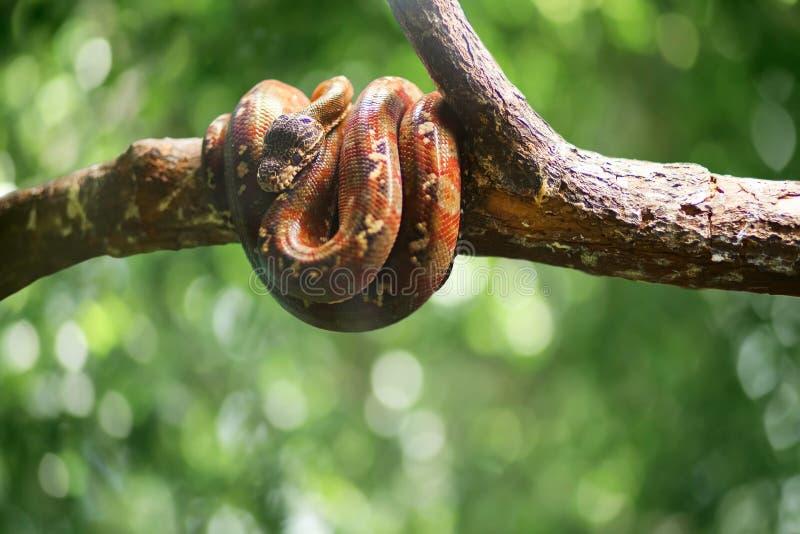 Wilde Schlange auf dem grünen bokeh verlässt backround Wilde Natur lizenzfreie stockfotos