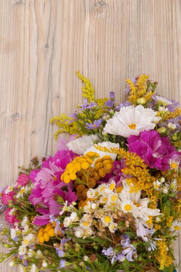 Wilde Sommer-Blumen lizenzfreies stockfoto