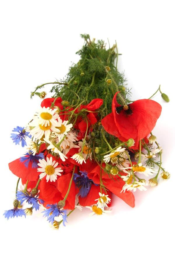 Wilde Sommerblumen stockfotos