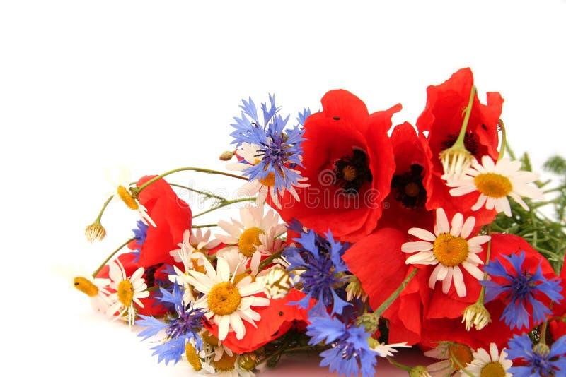Wilde Sommerblumen stockfotografie