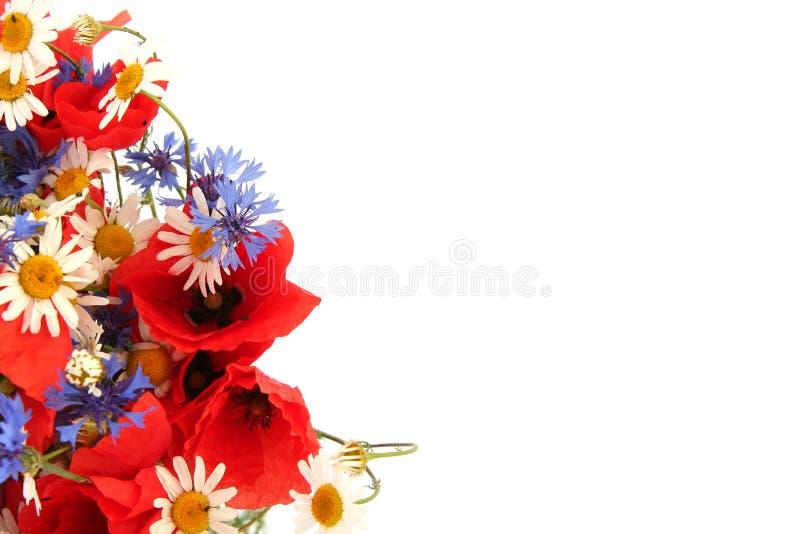 Wilde Sommerblumen lizenzfreie stockfotos