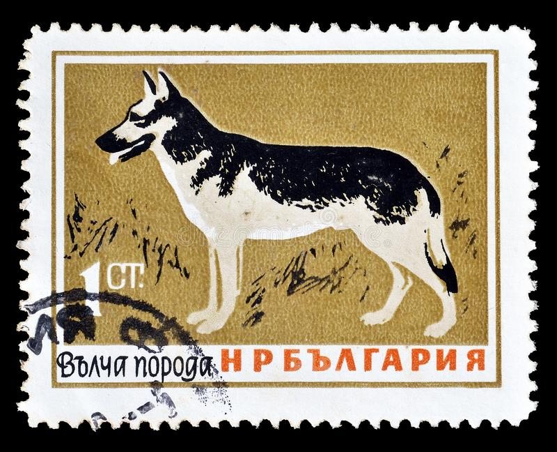 Wilde Tiere auf Briefmarken stockbild