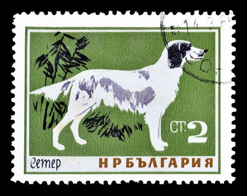 Wilde Tiere auf Briefmarken lizenzfreies stockfoto