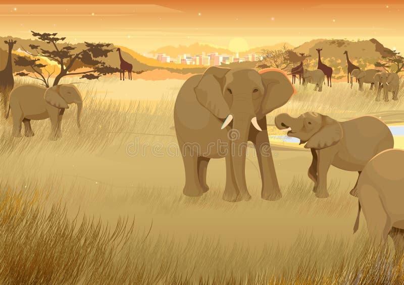 Wilde Tiere im Dschungel von Afrika lizenzfreie abbildung