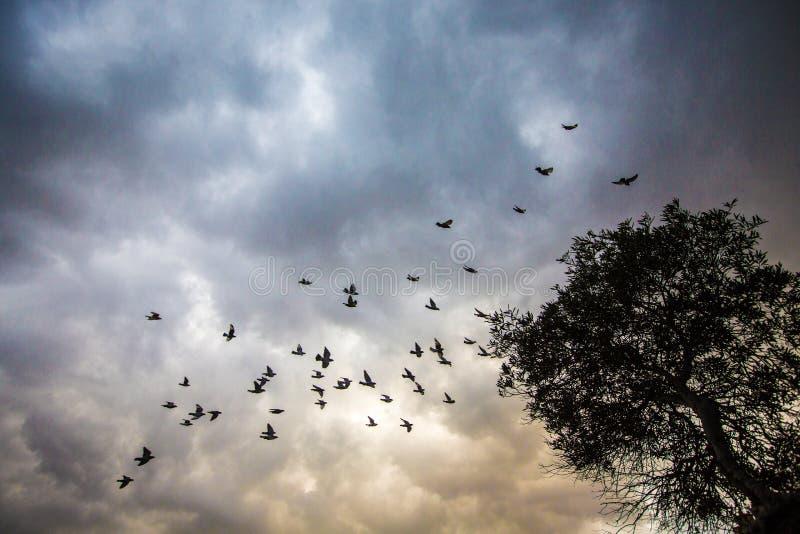 Wilde troep van vogels in bewolkte hemel stock foto's