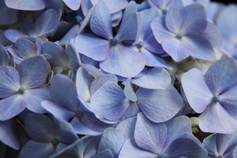 Wilde tropische Blume lizenzfreie stockfotografie