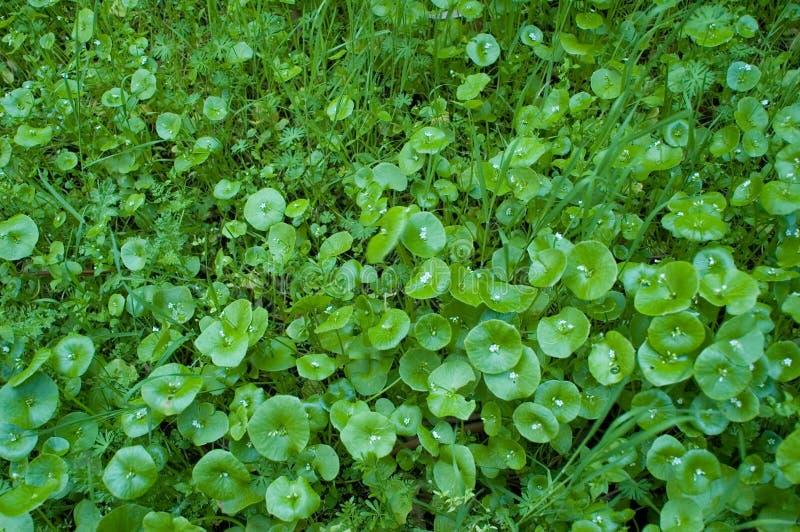 Wilde vegetatie royalty-vrije stock afbeelding