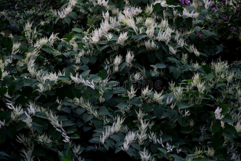 Wilde Vegetation mit weißen Blumen stockbild