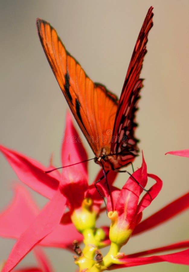 Wilde Vlinder stock afbeelding