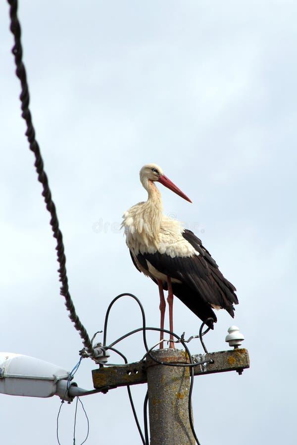 Wilde vogels en zeemeeuwen ter plaatse in Karakoy, Istanboel royalty-vrije stock afbeeldingen
