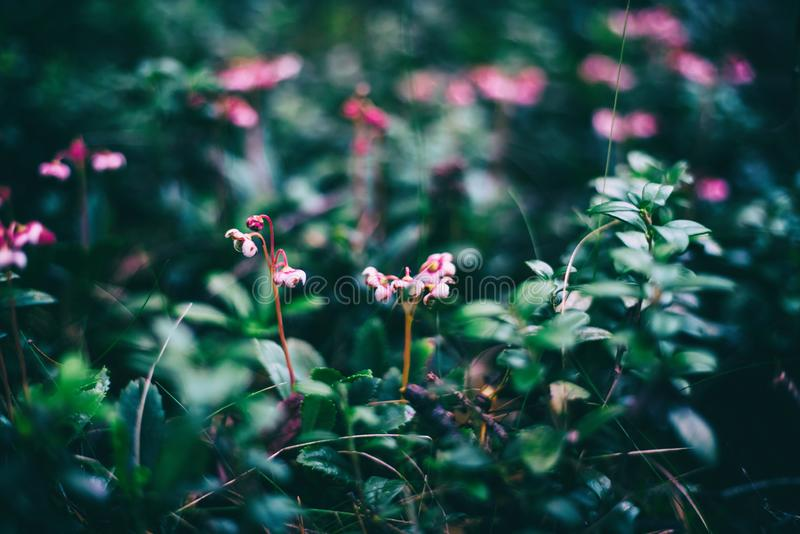 Wilde Walddetails, kleine rosa wilde Blumen, schöner natürlicher abstrakter Hintergrund und Beschaffenheit lizenzfreie stockfotografie
