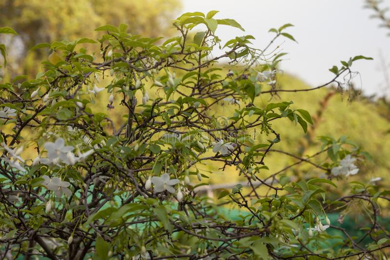 Wilde Waterpruim op de achtergrond van de onduidelijk beeldaard stock foto
