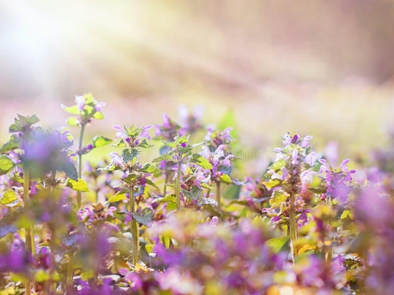 Wilde Wiesenblumen belichtet durch Sonnenlicht lizenzfreie stockfotos