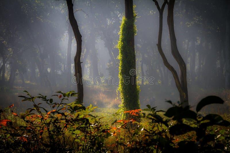Wilde wildernis van Nepal stock afbeelding