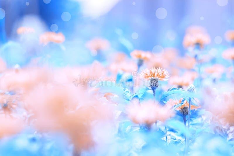 Wilde wildflowers roze korenbloemen op een mooie geschilderde blauwe achtergrond met hoogtepunten Mooi teder kunstbeeld selectief royalty-vrije stock foto