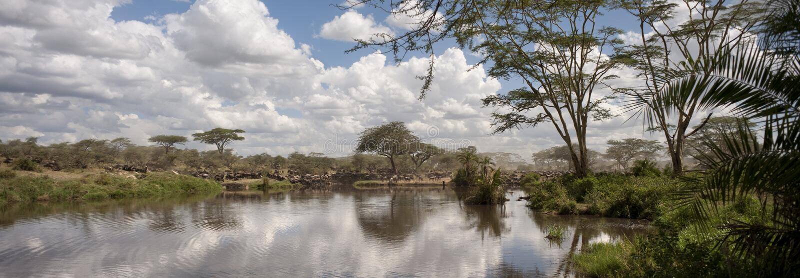 Wildebeest en el parque nacional de Serengeti foto de archivo libre de regalías