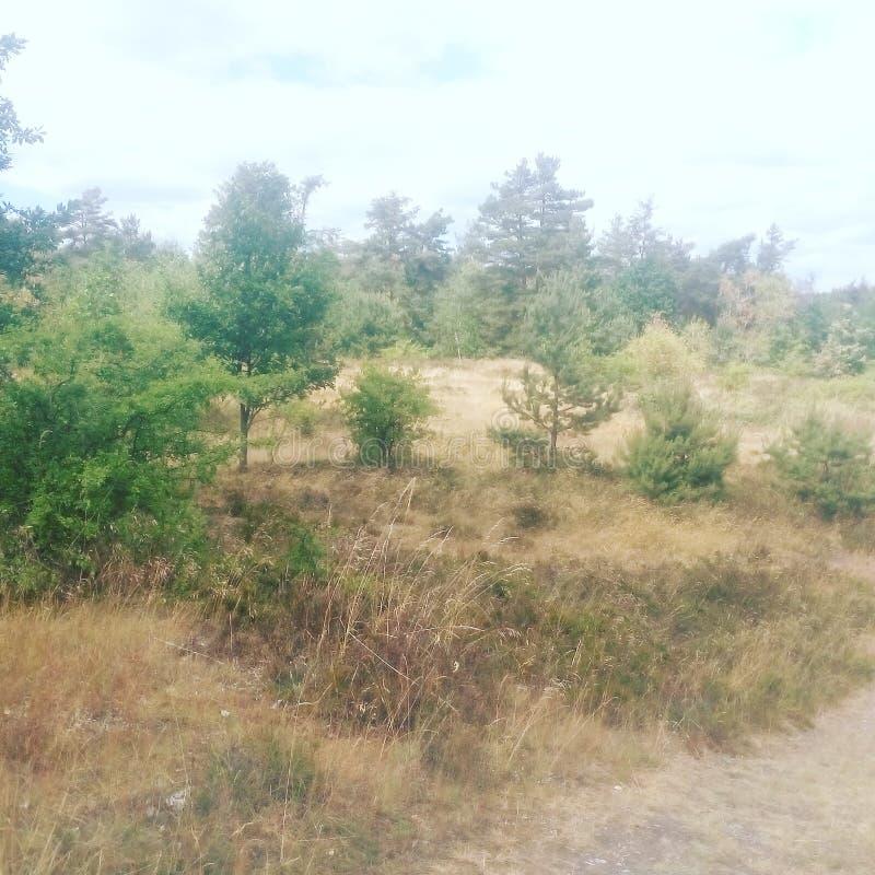 Wilder Bäume nà ¡ rodnà Park lizenzfreie stockfotografie