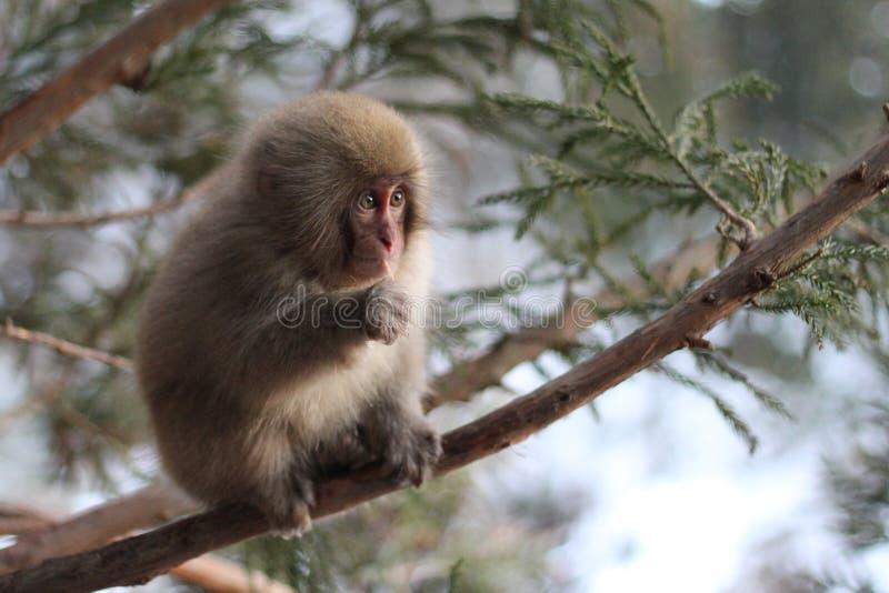 Wilder Baby-Affe stockbilder