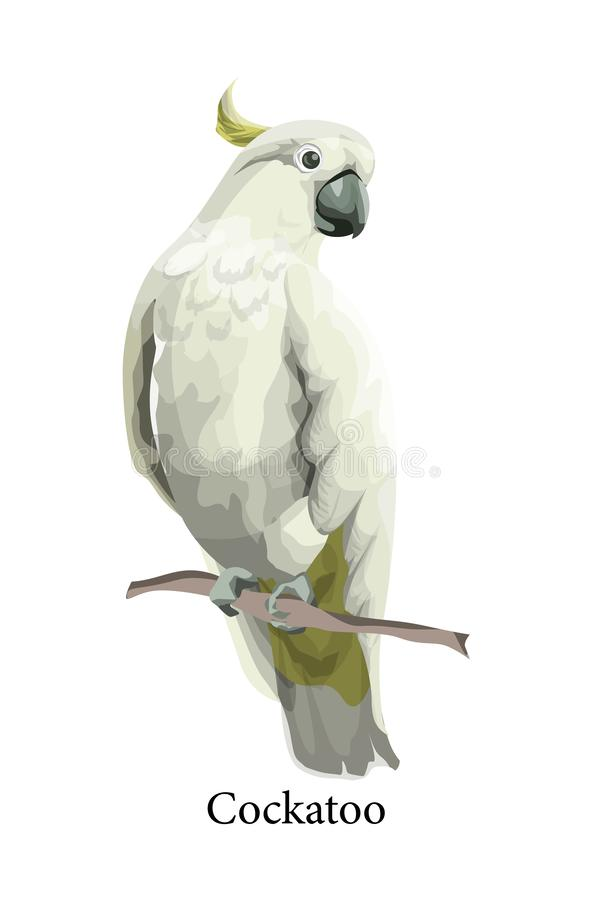 Wilder exotischer Vogel des Kakadupapageien in der realistischen Art vektor abbildung