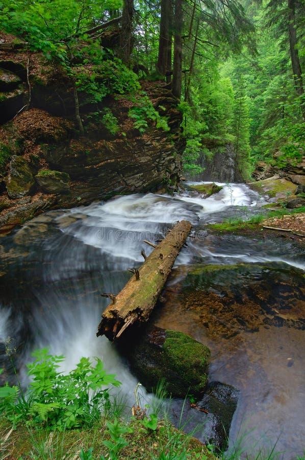 Wilder Fluss stockfotos