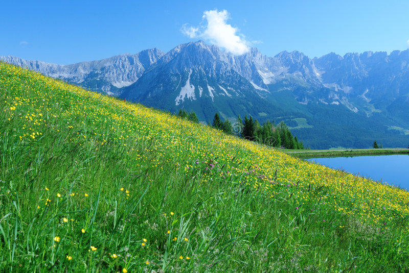 Wilder Kaiser. A blooming meadow at a hill in the Austrian alps with the Wilder Kaiser mountains in the background stock photo