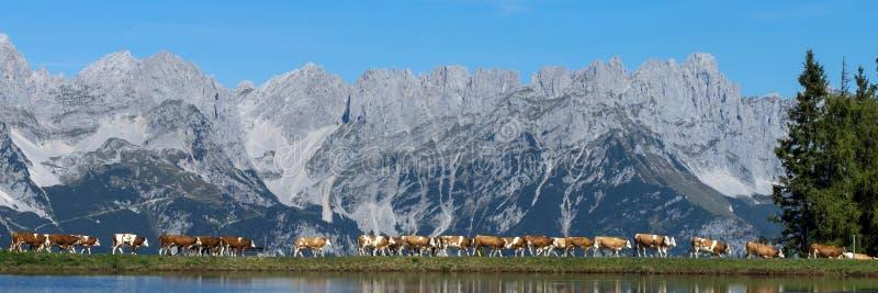 Wilder Kaiser, Tyrol, Autriche photographie stock libre de droits